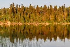 Verano de la reflexión del bosque del lago Fotografía de archivo libre de regalías