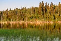Verano de la reflexión del bosque del lago Fotos de archivo
