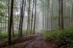 Verano de niebla Forrest Foto de archivo libre de regalías