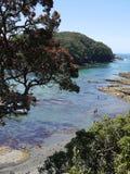 Verano de Nueva Zelanda: reserva marina Foto de archivo libre de regalías