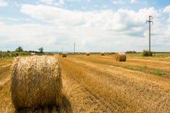 Verano del campo de maíz Fotografía de archivo libre de regalías