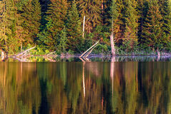 Verano del fondo de la reflexión del bosque del lago Imágenes de archivo libres de regalías