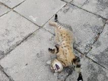 Verano del gato de Heppy Foto de archivo libre de regalías