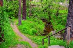 Verano del paisaje Las ventajas de la trayectoria a lo largo de la corriente del bosque Escalera de madera abajo a la trayectoria Imágenes de archivo libres de regalías