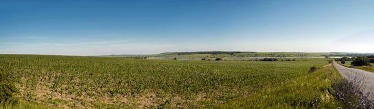 Verano del panorama del campo de maíz Imagen de archivo