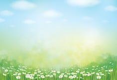 Verano del vector, verde, fondo de la naturaleza stock de ilustración
