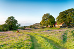Verano en Dartmoor Fotografía de archivo