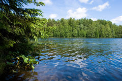 Verano en el lago del bosque Fotografía de archivo libre de regalías