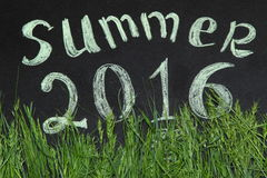 Verano 2016 en la hierba verde Foto de archivo libre de regalías