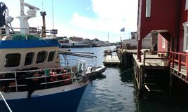 Verano en Noruega Fotos de archivo libres de regalías