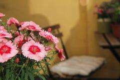 Verano en su balcón Fotografía de archivo libre de regalías