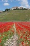 Verano floreciente Italia de las lentejas de Castelluccio foto de archivo