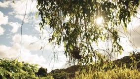 Verano Forest Image Imagenes de archivo
