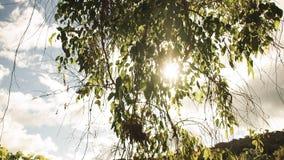 Verano Forest Image Imagen de archivo libre de regalías