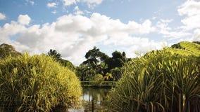 Verano Forest Image Fotografía de archivo