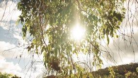 Verano Forest Image Fotos de archivo