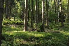 Verano Forest Landscape Foto de archivo libre de regalías