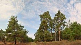 Verano Forrest Foto de archivo libre de regalías