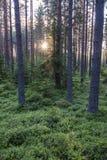 Verano Forrest Imagenes de archivo