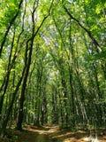 Verano húngaro del bosque foto de archivo libre de regalías