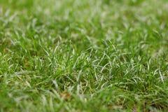 Verano - hierba verde en el parque Imagen de archivo