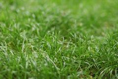 Verano - hierba verde en el parque Fotos de archivo