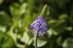 Verano Honey Work Imagen de archivo