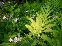 Verano: igualación de helechos y de wildflowers sunlit Imagenes de archivo