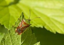 verano, insecto Fotografía de archivo libre de regalías