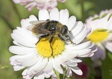 Verano, libración-mosca Fotos de archivo
