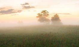 Verano, mañana de niebla, soleada Árboles en un brumoso, campo de la mañana Imagen de archivo libre de regalías