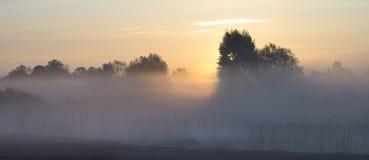 Verano, mañana de niebla, soleada Árboles en un brumoso, campo de la mañana Fotos de archivo