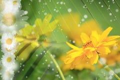 Verano, margarita, fondo amarillo de la flor Fotos de archivo