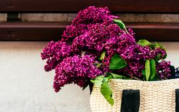 Verano o imagen de la primavera del bolso del comprador con el manojo grande de flores de la lila imágenes de archivo libres de regalías
