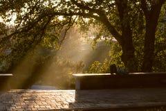 Verano o parque temprano del oto?o en la puesta del sol imagen de archivo libre de regalías