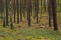 Verano, otoño en bosque salvaje Imagen de archivo