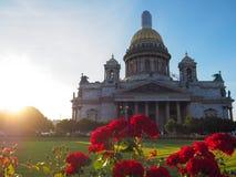 Verano-otoño en St Petersburg Rosas florecientes en los rayos de la tarde del sol por la catedral del ` s del St Isaac Imagen de archivo libre de regalías