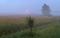 Verano, prado nebuloso en el claro de luna Fotos de archivo libres de regalías