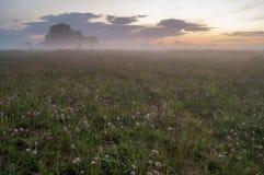Verano, prado nebuloso en el claro de luna Foto de archivo