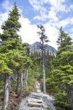 Verano que camina en Alaska Imagen de archivo libre de regalías