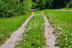Verano rural del paisaje Camino Los dientes de león mullidos blancos a lo largo del camino julio Imágenes de archivo libres de regalías