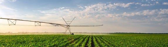 Verano soleado de riego agrícola del campo de maíz del sistema de irrigación fotografía de archivo