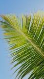 Verano soleado verde de la palmera Foto de archivo libre de regalías