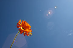 Verano Sun foto de archivo libre de regalías