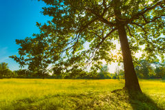 Verano Sunny Forest Trees And Green Grass Naturaleza Imagen de archivo