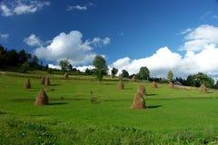 Verano verde Imagen de archivo