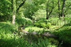 Verano verde Fotografía de archivo libre de regalías