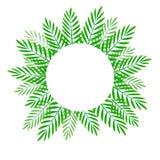 Verano y hojas de palma verdes asombrosas del verano tropical Fotos de archivo