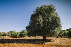 Veranos secos Turquía Imagen de archivo libre de regalías