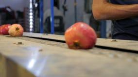 Verarbeitung des Granatapfels stock video